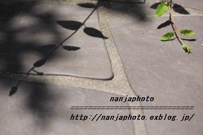e0268999_1232419.jpg