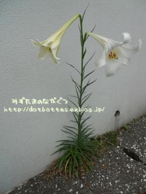 d0170109_22192488.jpg