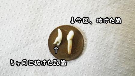 f0129214_1648681.jpg