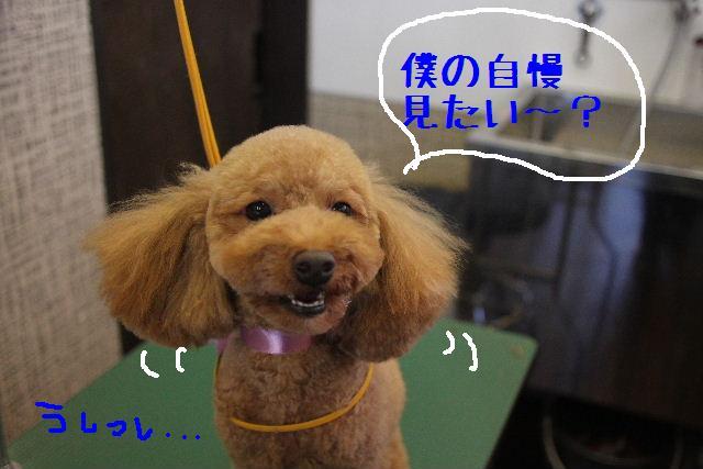 カクガリの丸坊主!!_b0130018_1121013.jpg