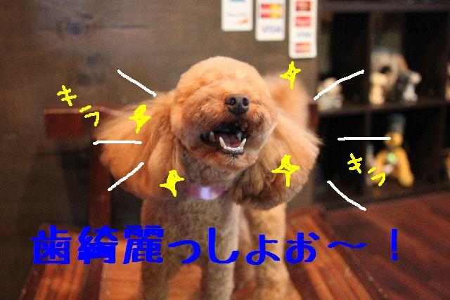 カクガリの丸坊主!!_b0130018_1121693.jpg