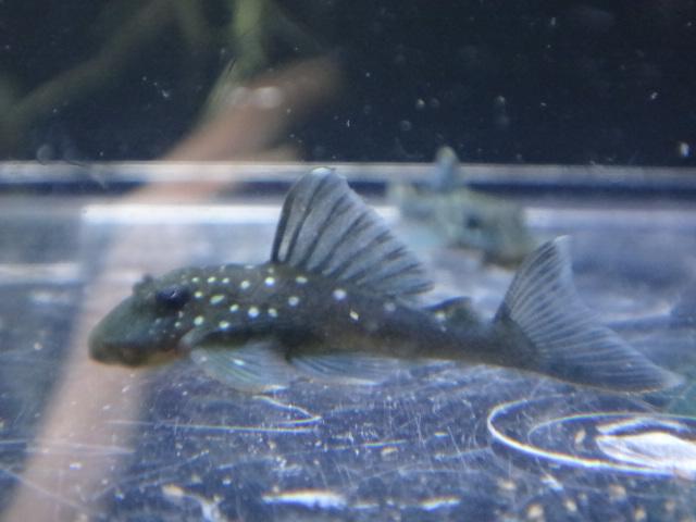120823 熱帯魚・水草_f0189122_13104726.jpg
