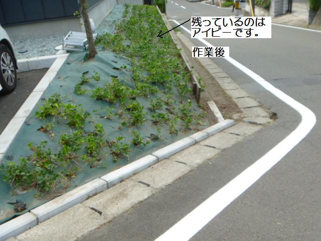 除草作業_c0186441_20102967.jpg