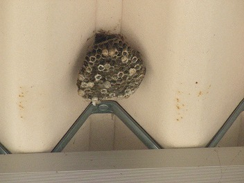 ハチの巣退治!_a0272042_1250302.jpg