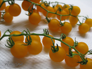 トマト大好き_e0262651_1845046.png