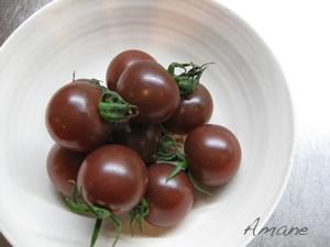 トマト大好き_e0262651_184528.png