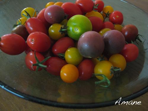 トマト大好き_e0262651_1854072.png