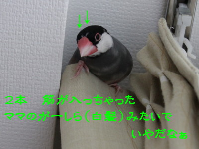 b0158061_21323417.jpg