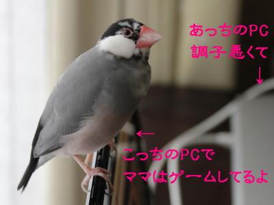 b0158061_213239.jpg