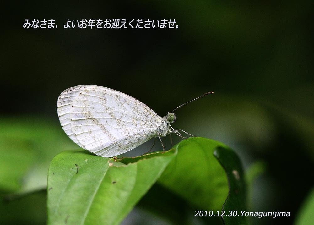 f0181821_15555918.jpg