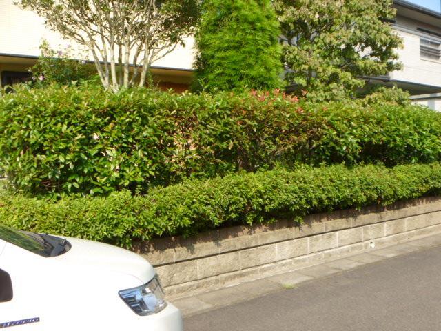 庭仕事と確認へ_c0186441_21242164.jpg