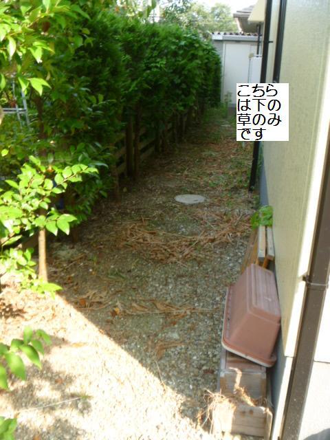 庭仕事と確認へ_c0186441_21255563.jpg