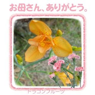 f0031546_2013562.jpg