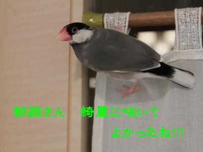 b0158061_22173270.jpg