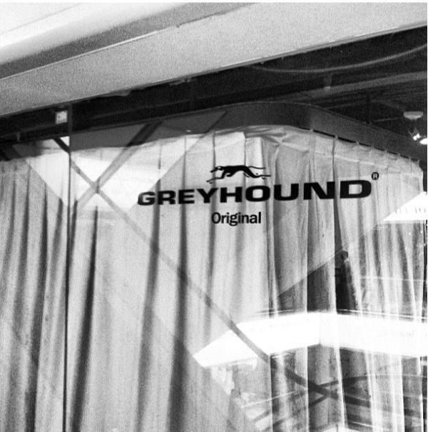 We Love GREYHOUND !!_d0103566_14275736.jpg