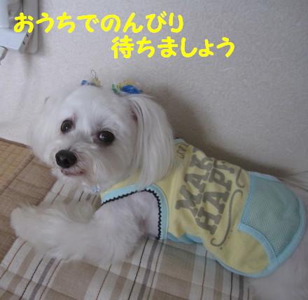 b0193480_1561787.jpg