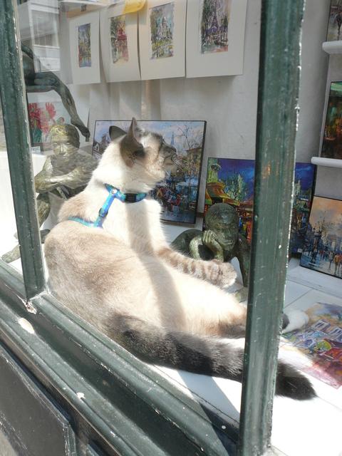 世界の猫 写真館 in  パリ_e0237625_1262412.jpg