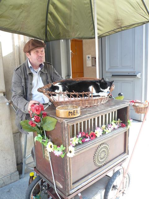 世界の猫 写真館 in  パリ_e0237625_1423498.jpg