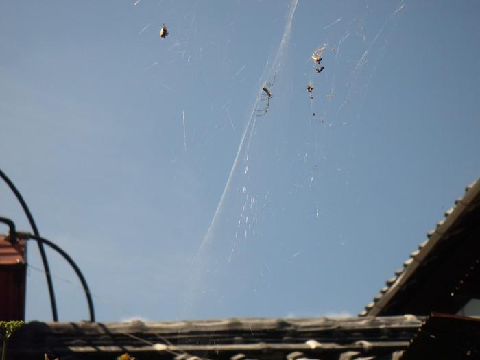 虹色の蜘蛛の巣☆_f0183846_11224422.jpg