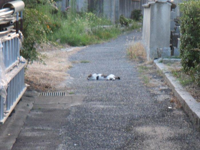 通称外猫「いりこ」_f0183846_20495554.jpg