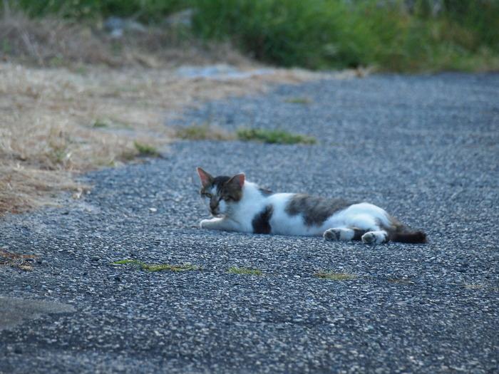 通称外猫「いりこ」_f0183846_20532524.jpg