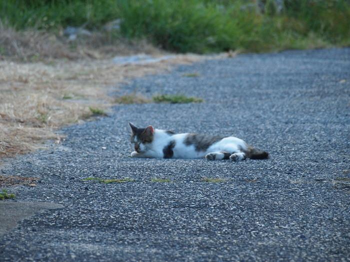 通称外猫「いりこ」_f0183846_20543460.jpg