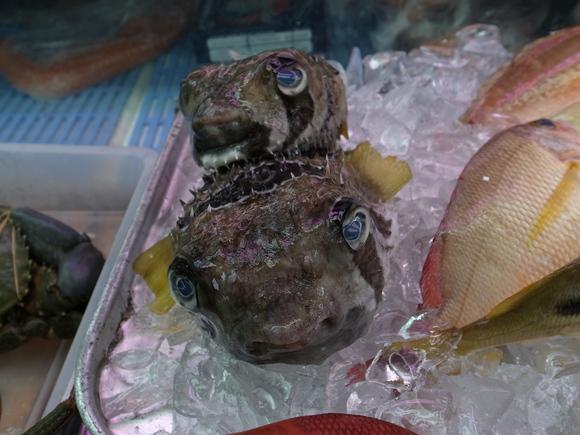 沖縄お魚の旅 その3 ~アバサー~ 120810、12_c0237483_1425341.jpg