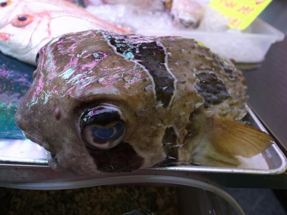 沖縄お魚の旅 その3 ~アバサー~ 120810、12_c0237483_1461024.jpg