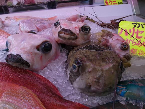 沖縄お魚の旅 その3 ~アバサー~ 120810、12_c0237483_147574.jpg