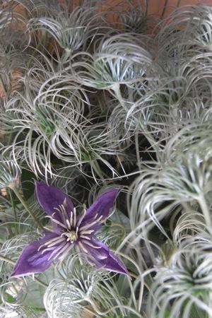 花から種へ_d0104091_1827157.jpg