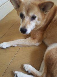 老犬_d0228130_8242059.jpg