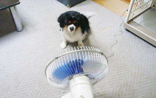 暑すぎです。_c0051132_221140100.jpg