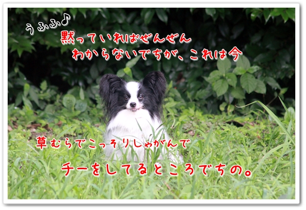 d0013149_2314301.jpg