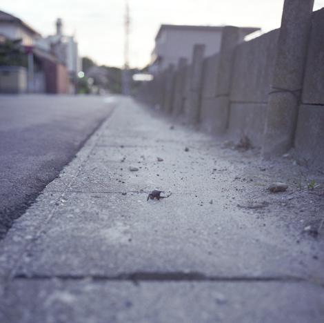 f0176353_2222011.jpg