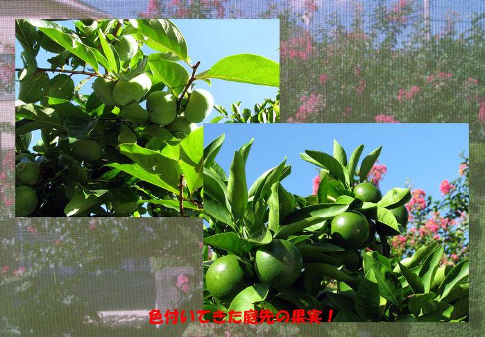 f0159858_11111120.jpg