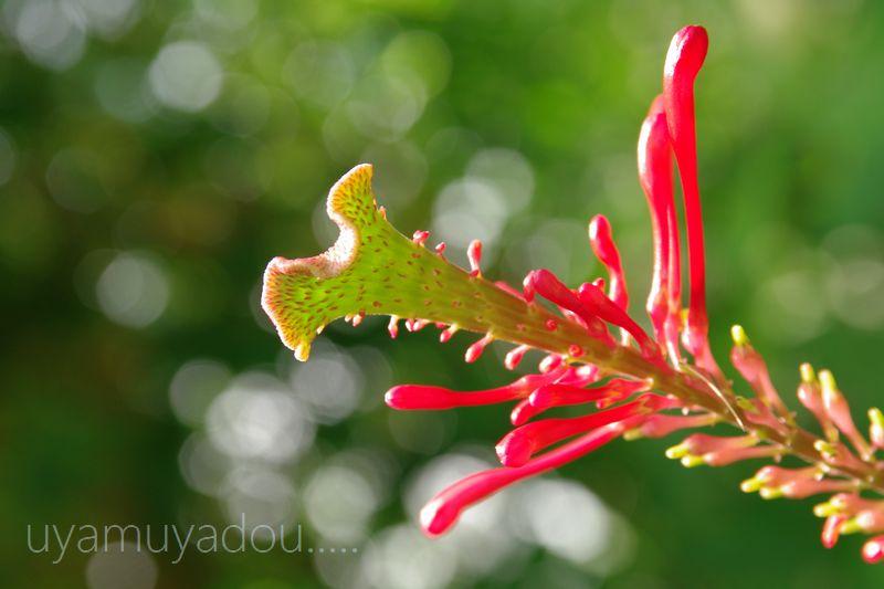 琵琶湖水生植物園_a0157263_1725685.jpg