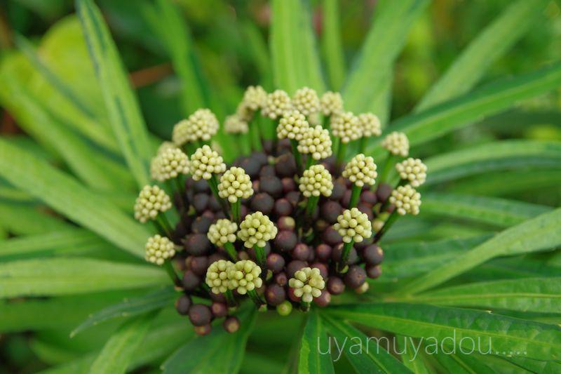 琵琶湖水生植物園_a0157263_17331527.jpg