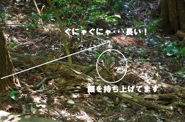 f0169884_19303559.jpg