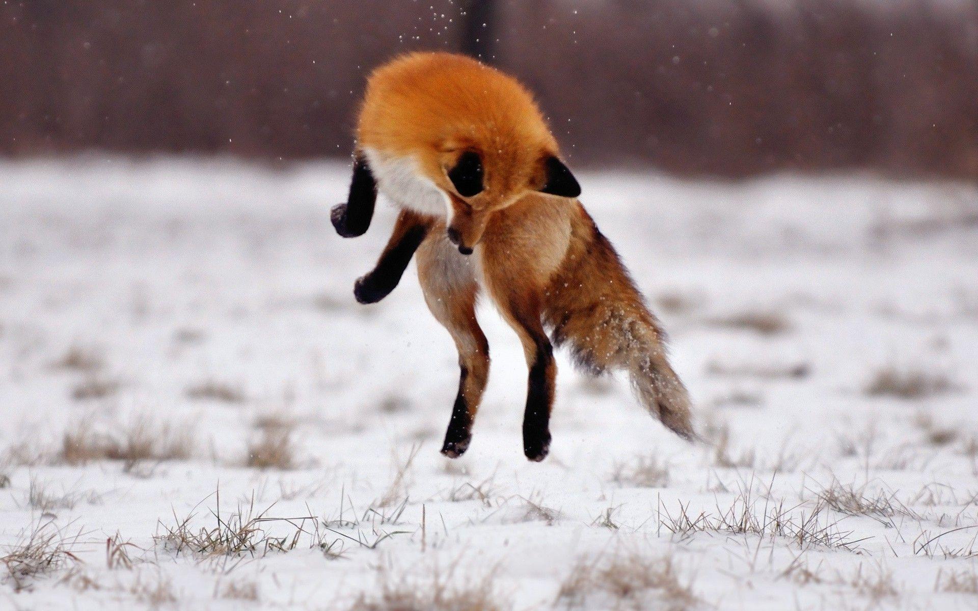 親なし狐のくずは_f0168392_22552747.jpg