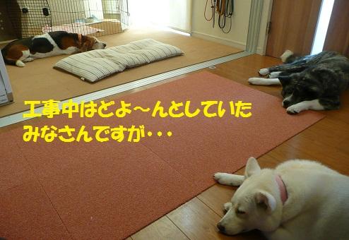 f0121712_15412183.jpg