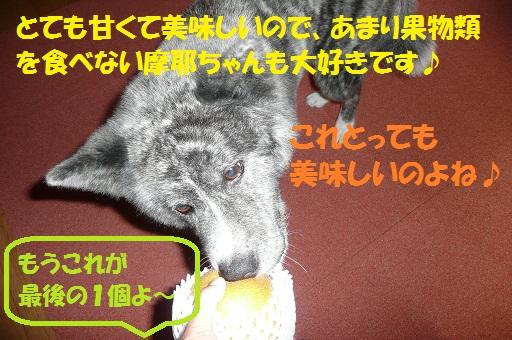 f0121712_160929.jpg