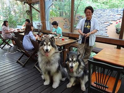 アラスカンマラミュート 【Chef\'s Report】_f0111415_21591037.jpg