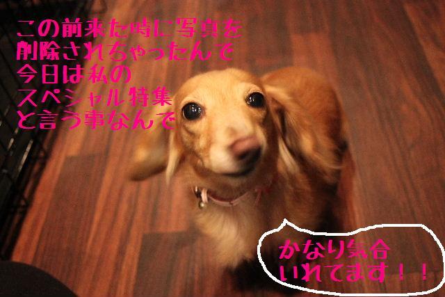 b0130018_0194397.jpg