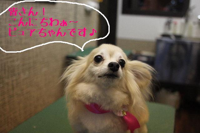無事!!_b0130018_17135347.jpg