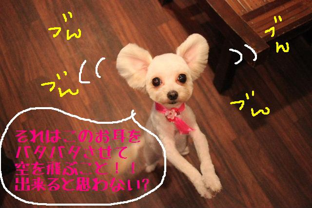 無事!!_b0130018_17163313.jpg
