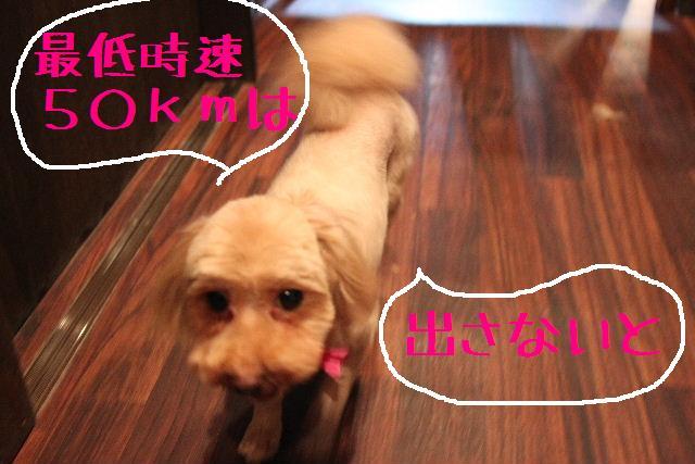 無事!!_b0130018_17165020.jpg