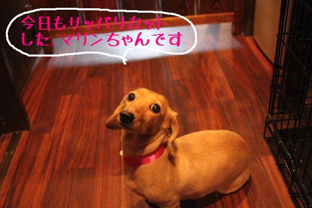 無事!!_b0130018_17181924.jpg
