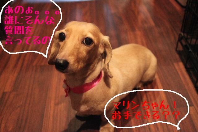 無事!!_b0130018_17182581.jpg