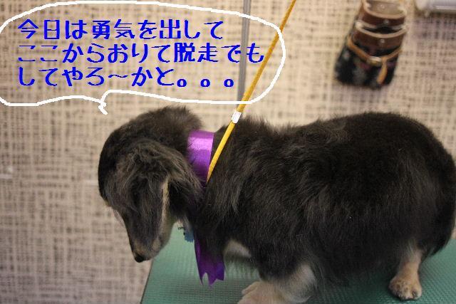 無事!!_b0130018_1720141.jpg
