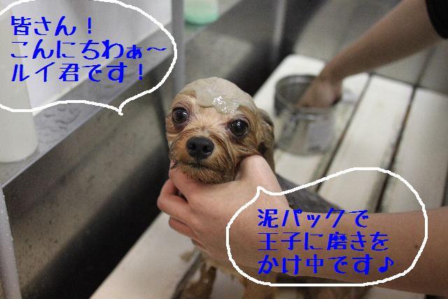 無事!!_b0130018_1762883.jpg